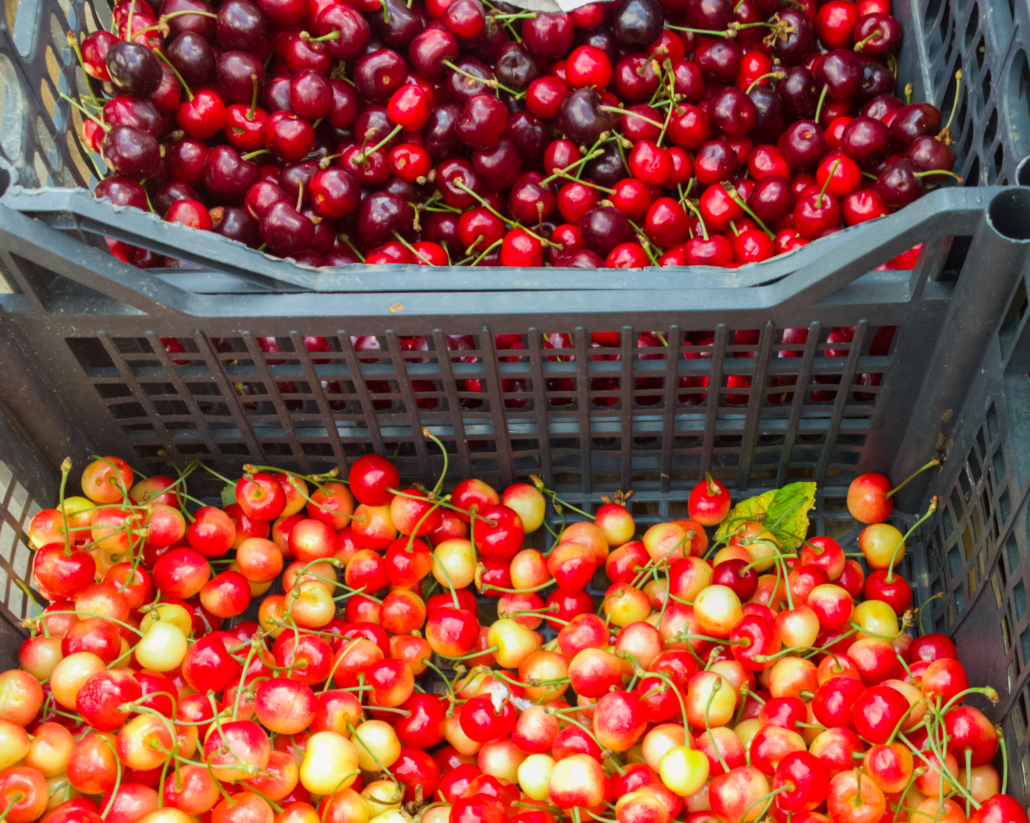 """One student learned to """"read"""" people when she sold cherries at the market, and learned to trust herself."""
